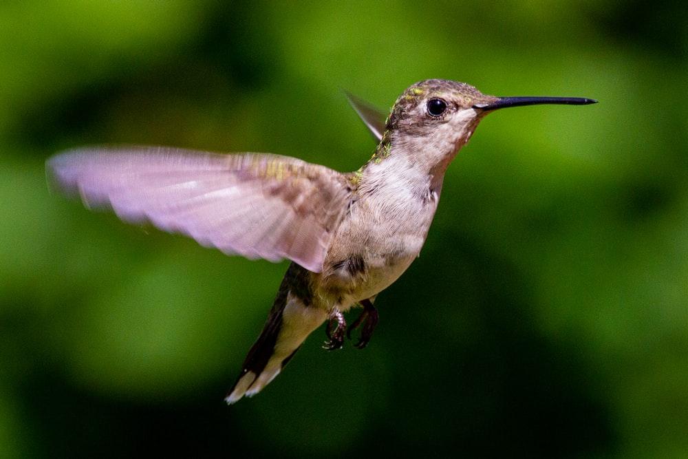 Hummingbird Pictures – Hoe maak je geweldige foto's